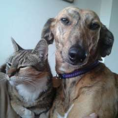 "Happily Homed Lurcher SOS Dog Dobbie with ""her"" cat Flo"